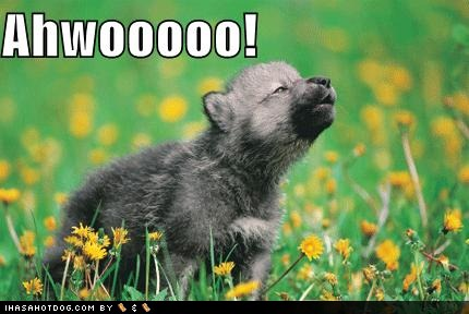 How to suggest something! Cute_puppy_pictures_little_dog_howls_like_a_wolf