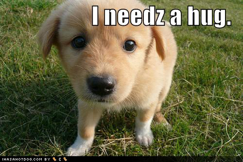 cute_puppy_pictures_outside_needs_hug.jp